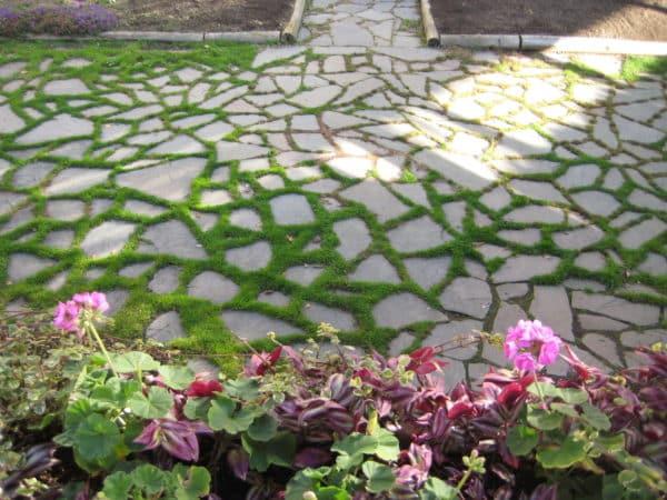 Bluestone Irregular Flagstone Path